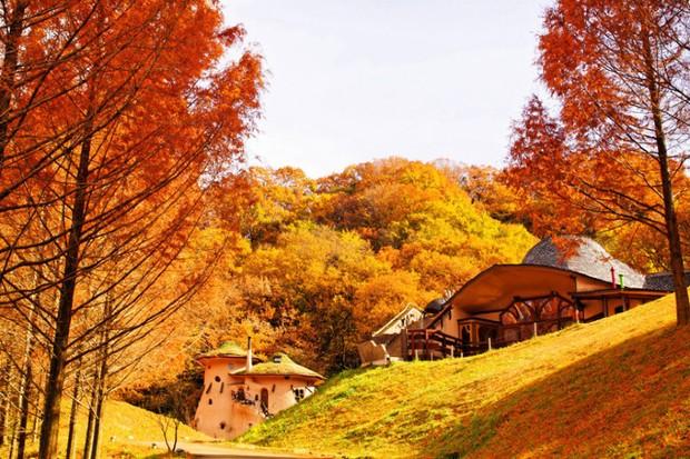 Vé máy bay đi Nhật Bản giá rẻ hãng EVA Air